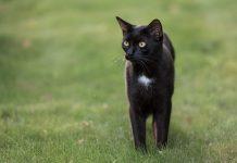 Gatto nero, Immagini da Google contrassegnate per essere riutilizzate